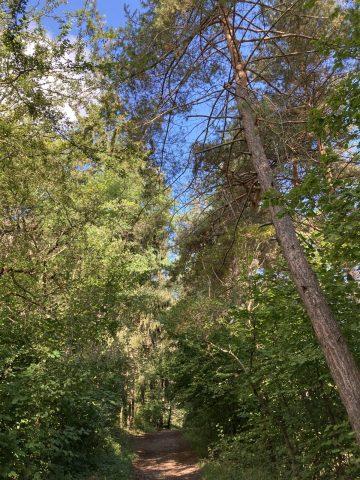 Forêt vers la Lignarre