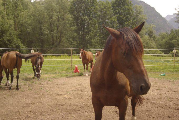 Chevaux Caval'Oisans