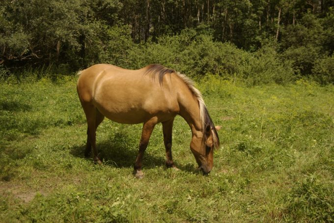 Poney Caval'Oisans