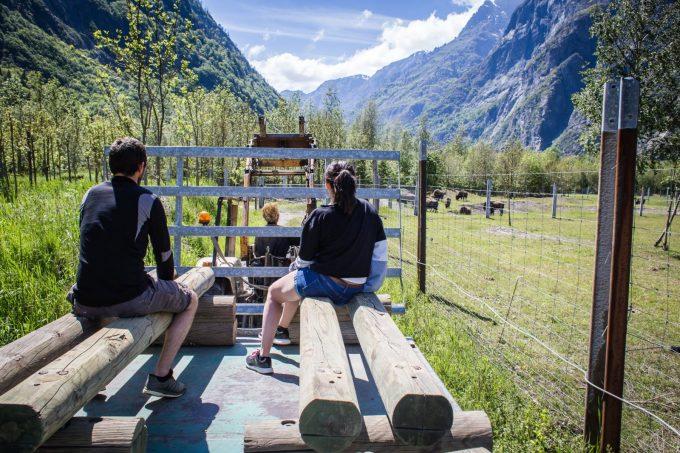 Visite de la ferme des bisons