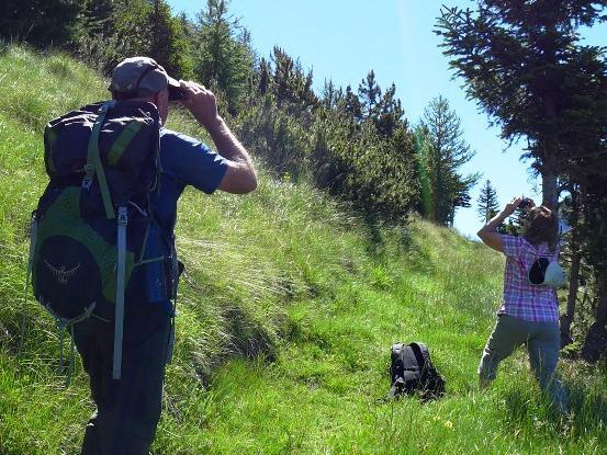Découverte des oiseaux – Villar d'Arène – La Grave