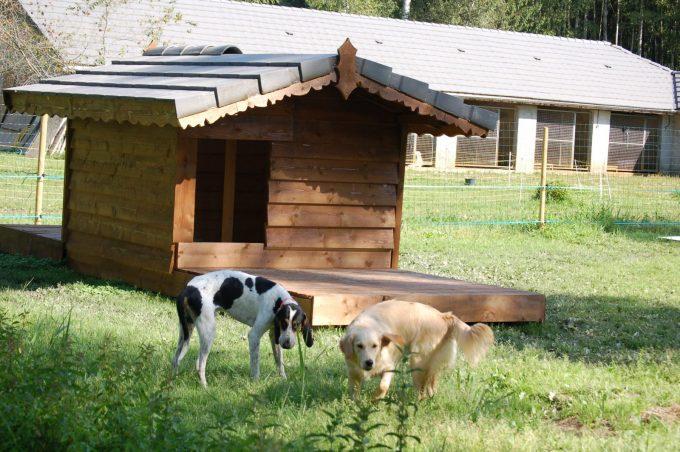 pension canine des Ilas